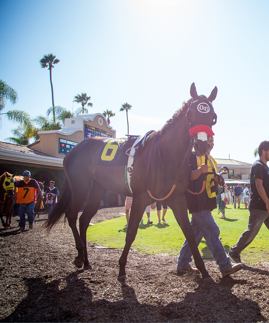 Experience the 2017 Breeders' Cup