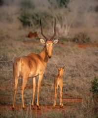 Capturing Africa's Antelope Valley