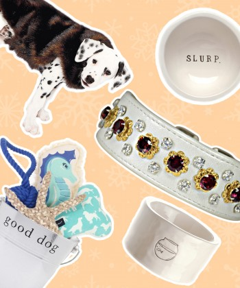 Gifts for Man's Best Furry Friends