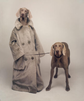 You Can See Artful Canines at Fotomuseum Den Haag