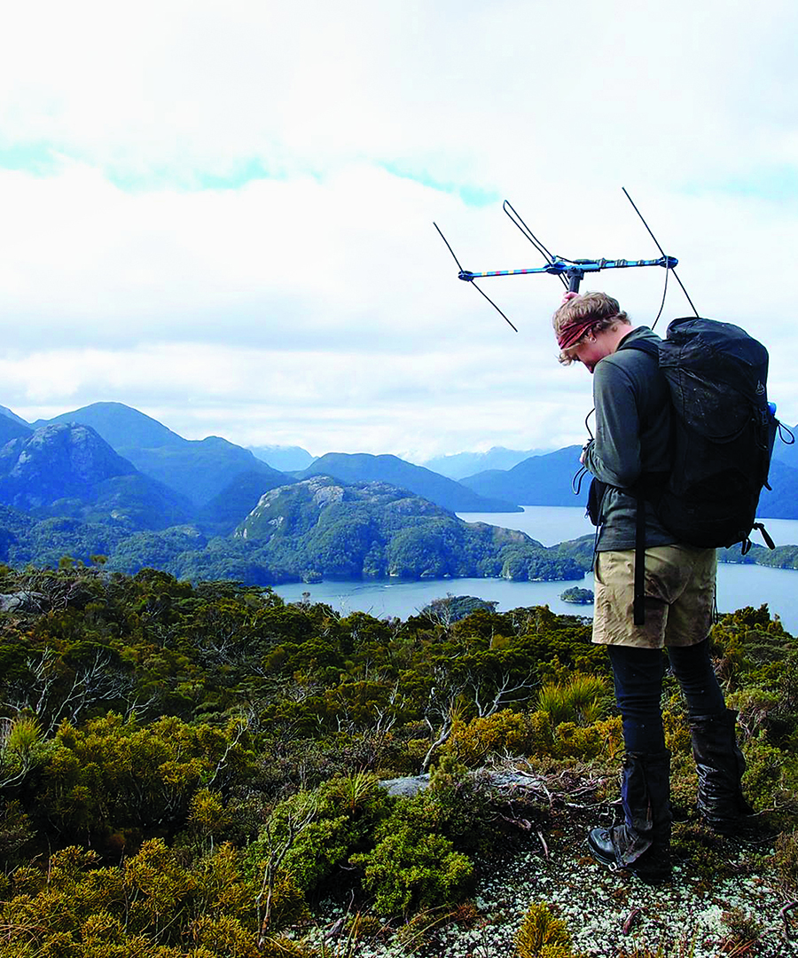 Saving The Birds of New Zealand