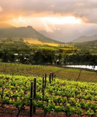 The Grape Escape: South Africa's Vineyards