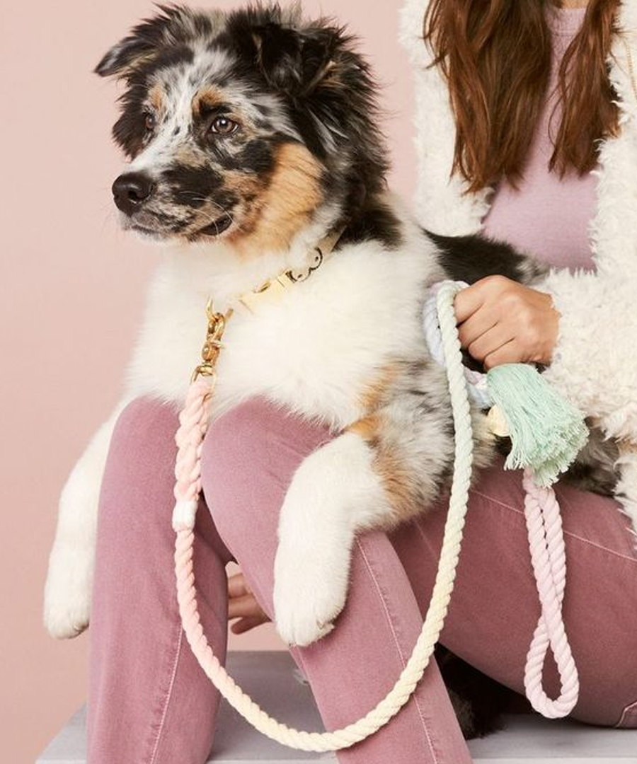 Products and Tools Your Dog Needs