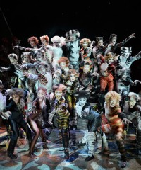 'Cats' by the Numbers