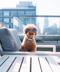 NYC Residences with Luxe Pet Amenities