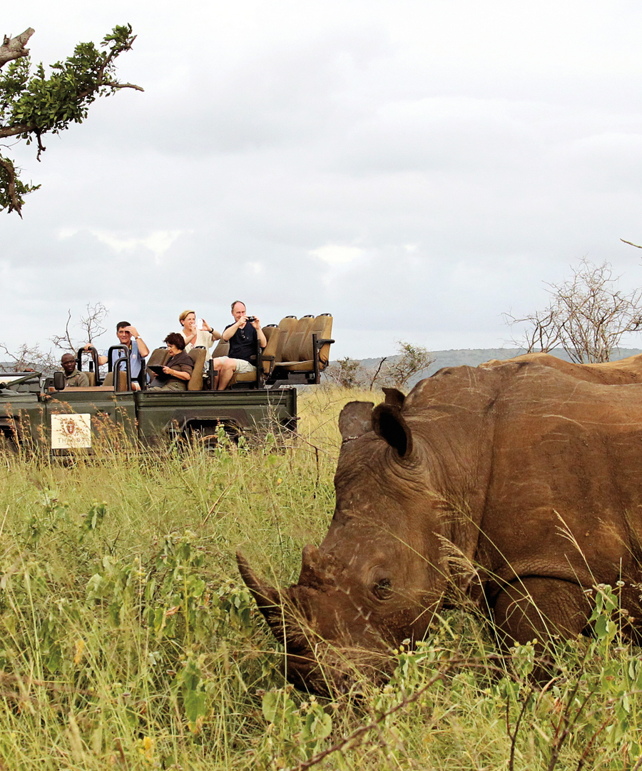 Stories From a South African Safari